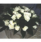 White Roses wrapped with refine cloth