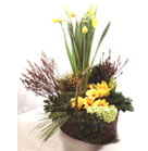 Yellow Lilies, Yellow Gerbera and Eucharis combined with green accents