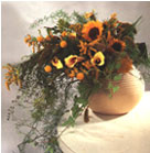 Sun Flowers, Yellow Calla, Asclepias Tuberosa and Achillea combined with Asparagus in ceramic vase